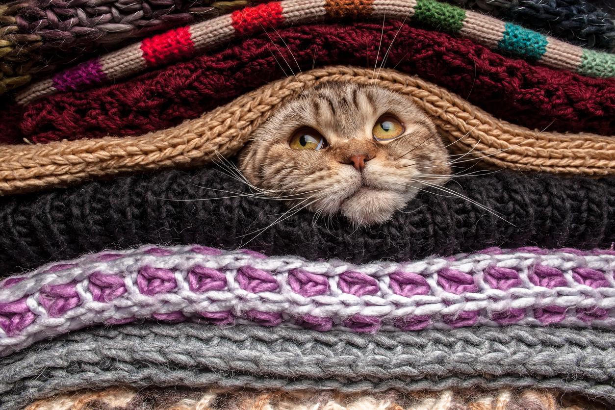 Infezioni vie respiratorie e aeree del gatto quattro zampe for Gatto che starnutisce