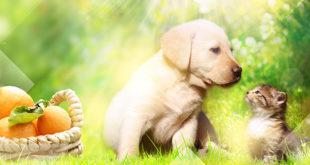 Cibo per cani e gatti a base di agrumi