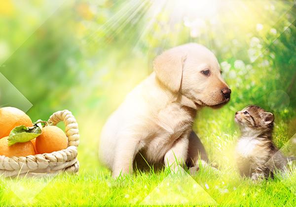 Cibo Per Cani E Gatti A Base Di Agrumi Quattro Zampe