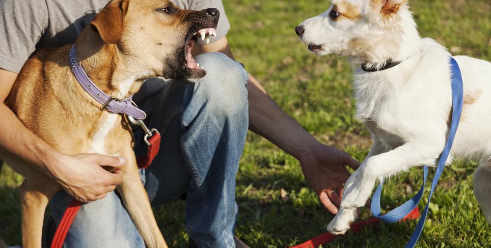 cane anziano aggressivo