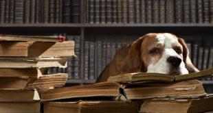 cane quartiere responsabilità civile