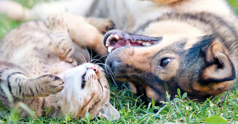 capire cane e gatto