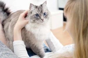 coccolare gatto consigli