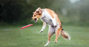disc dog