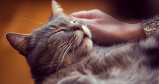 accarezzatore di gatti