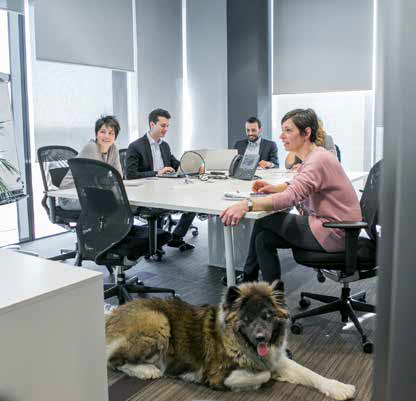 cane in sala riunioni