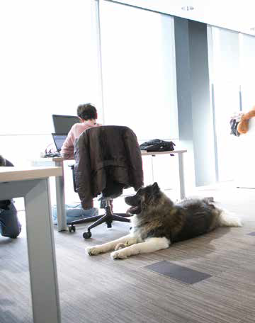 vantaggi cani in ufficio