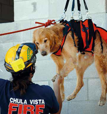 cane 11 settembre