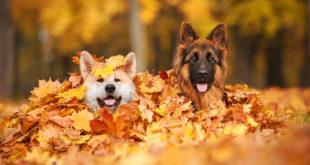alimenti prebiotici monoproteici cane