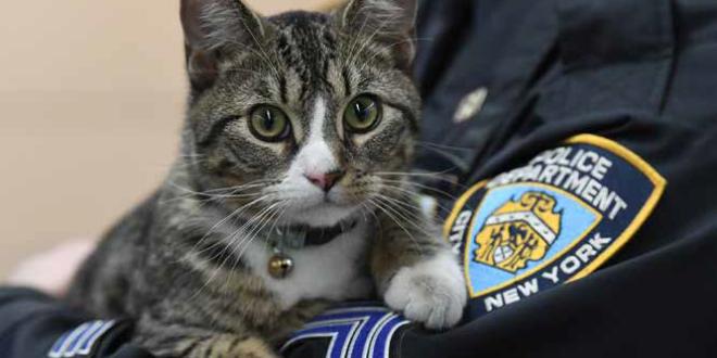 martin gatto poliziotto new york