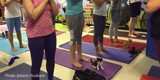 yoga con i gatti