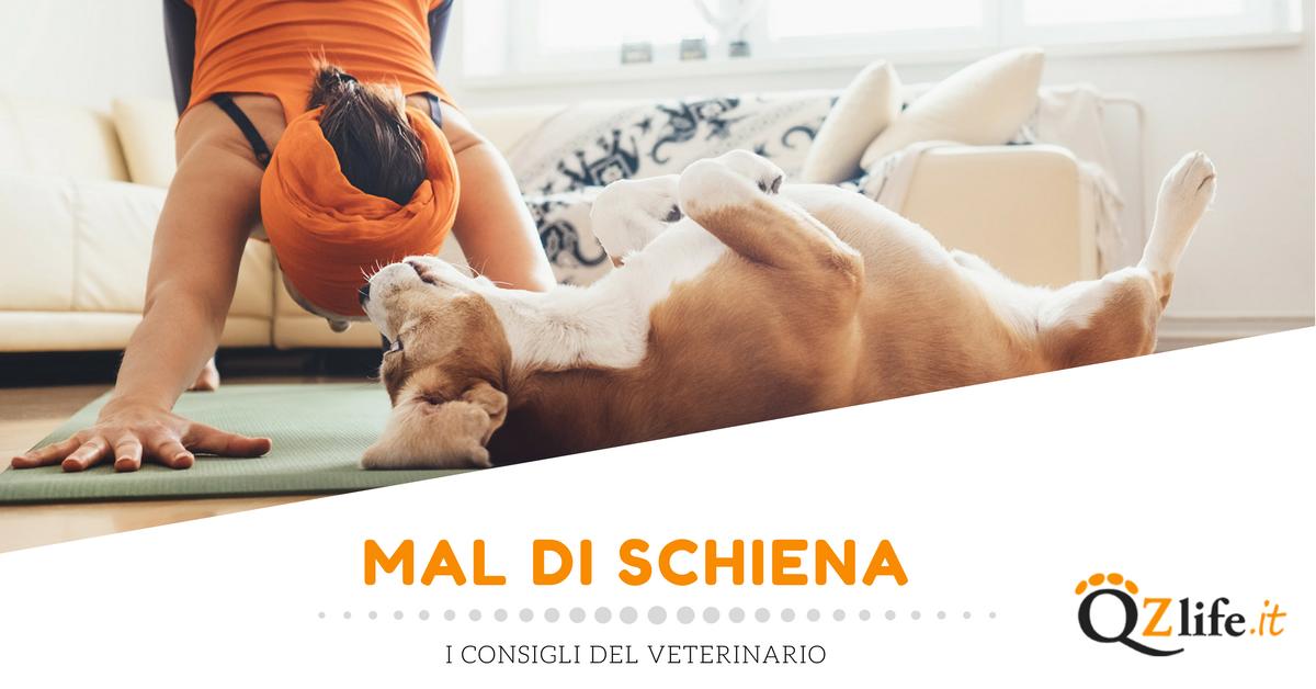 Come curare il mal di schiena del cane - Quattro Zampe