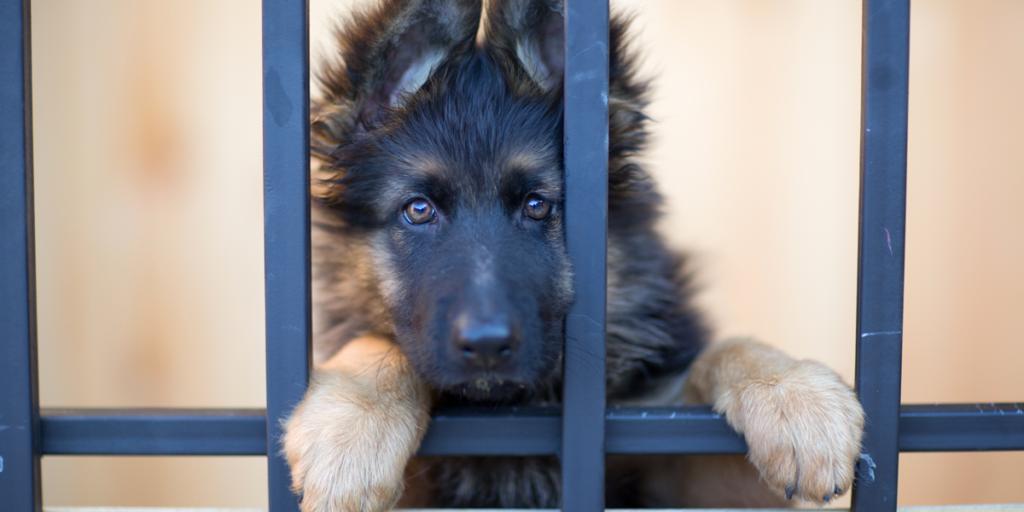 adozione cane