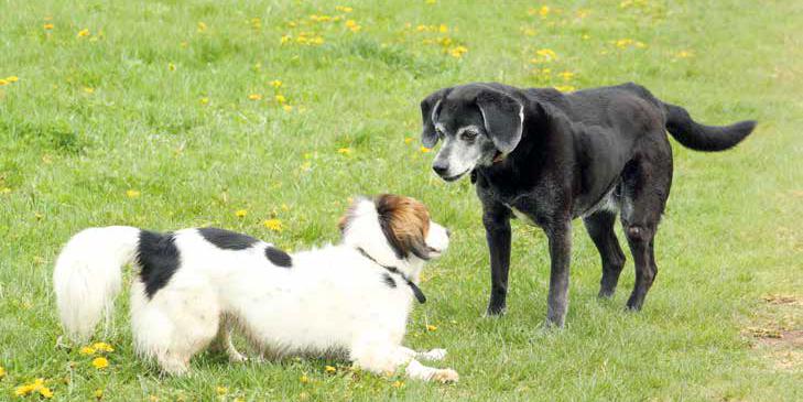 coda cane