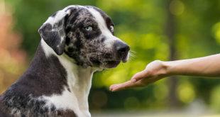 cane odia profumo
