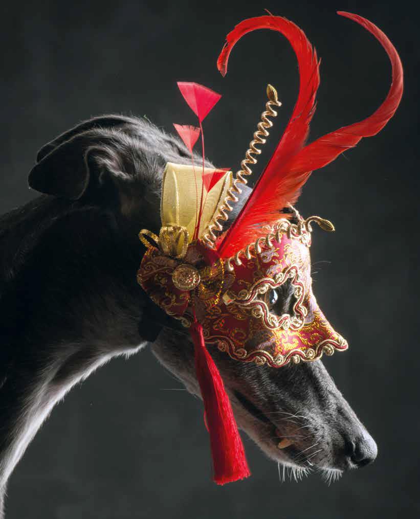 foto cani venezia