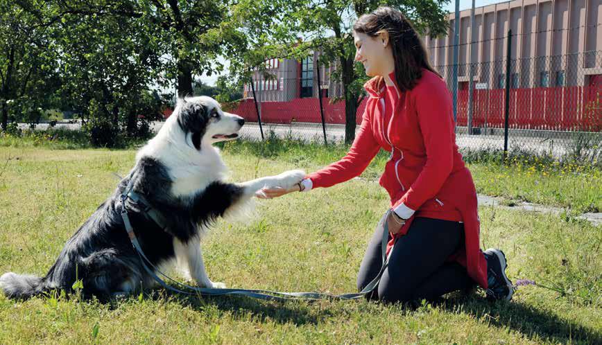 live dog school