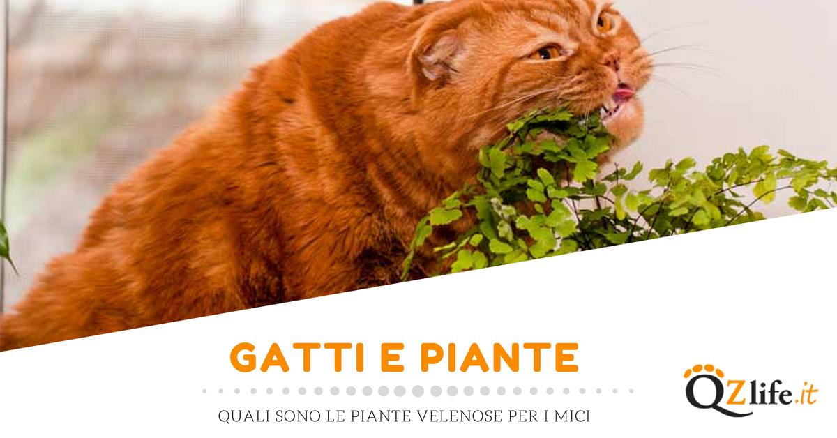 Piante velenose per i gatti elenco e sintomi quattro zampe for Piante velenose per i cani