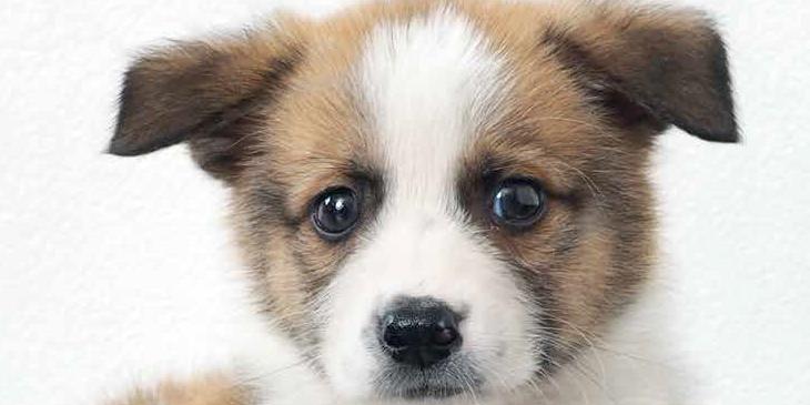 un cucciolo in casa