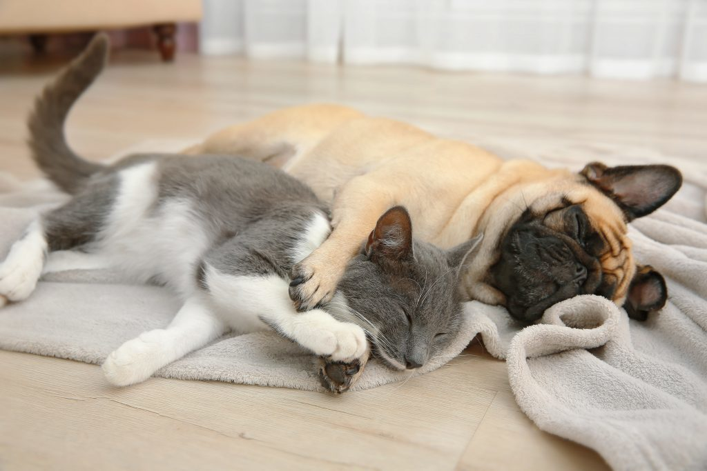detrazioni cane e gatto