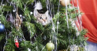gatto albero