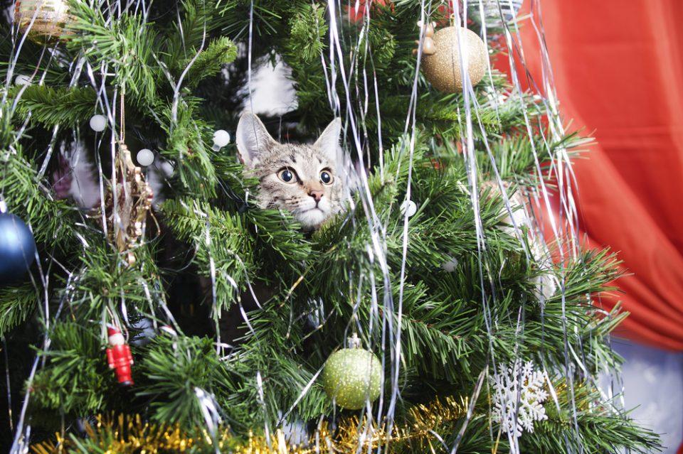 Albero Di Natale A Prova Di Gatto Quattro Zampe
