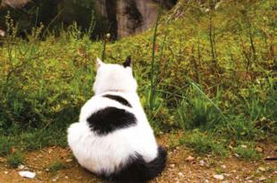 gatti amici dei monaci