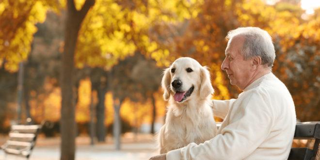 cani e anziani