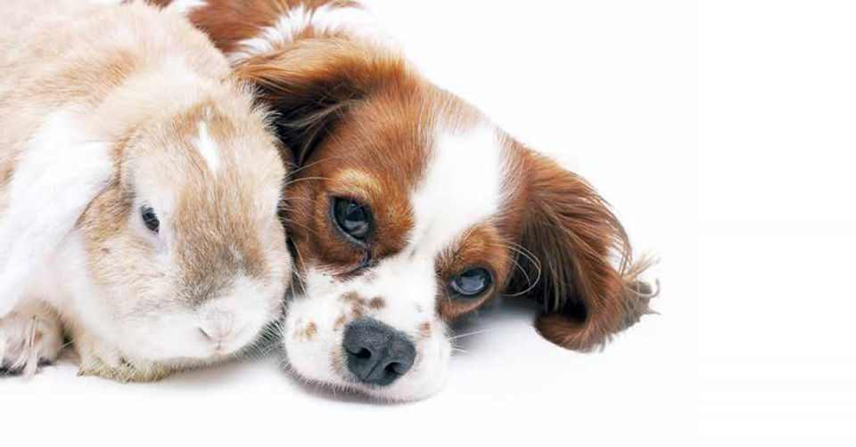 Una seconda opportunità per questo tenero cane che ha perso le