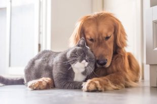 gatti meglio dei cani