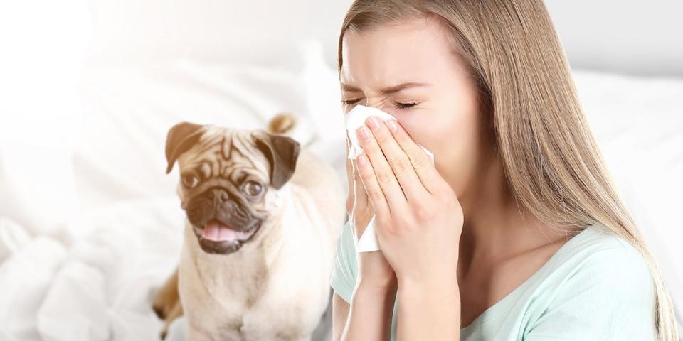 Come Vivere Con Un Gatto O Un Cane Se Si è Allergici Quattro Zampe