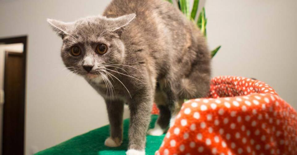 Perché I Gatti Hanno Paura Dei Cetrioli Quattro Zampe