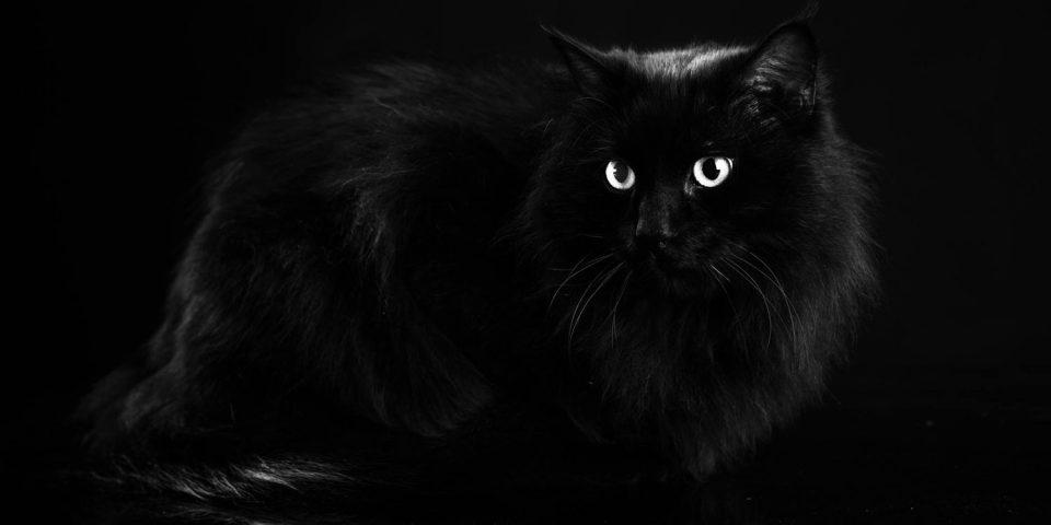 grande nero bottino foto