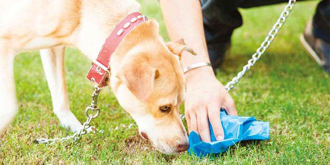 Coprofagia Cosa Fare Quando Il Cane Mangia Le Feci Quattro Zampe