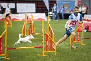 alberto marmo agility gara campionato educazione addestramento