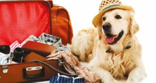 pet valigia viaggiare