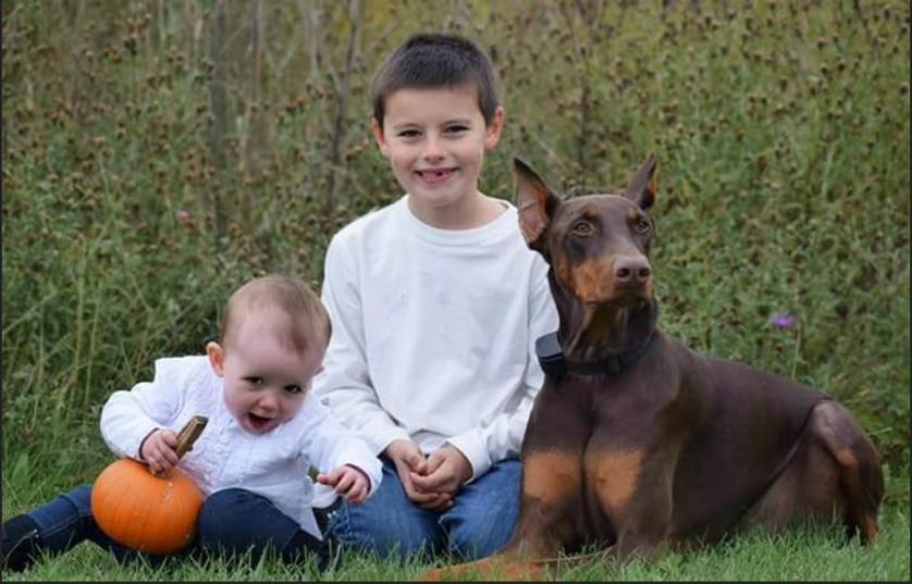 doberman, bambino, giocattoli, pet therapy