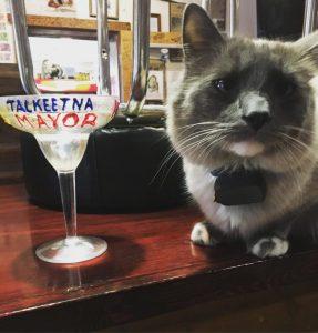 denali gatto sindaco