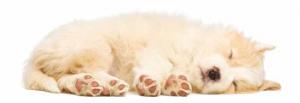 cane, dormire, sonno