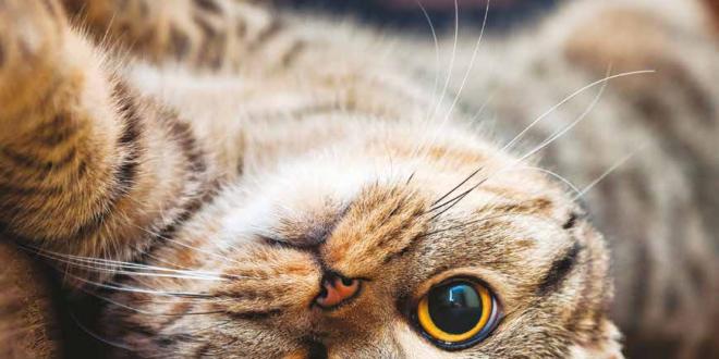gatto territorio
