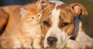 raggio di sole animali outdoor cuscineria cani gatti dormire