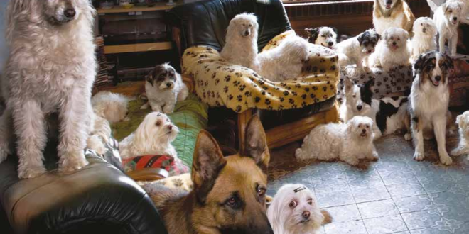 cani numero pets appartamento