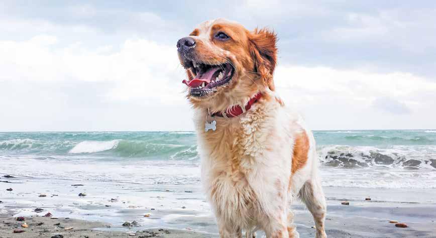 viaggi pet-friendly scarlino