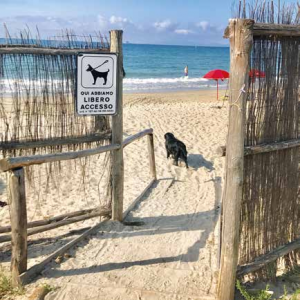viaggi pet-friendly scarlino