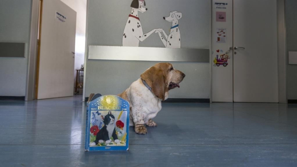 serena, bimbi, cane, bassett hound