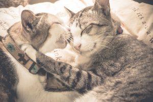 bacio gatti