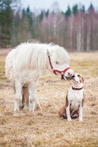 bacio pony cane