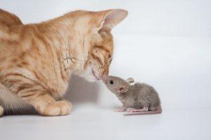 bacio gatto e topo