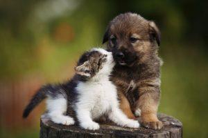 bacio gatto cane