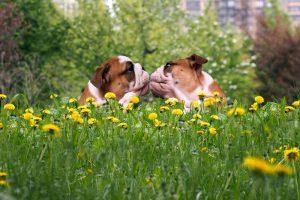 bacio cani